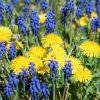 Nur Blau und Gelb