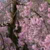 Sigma sd Quattro: Foveon-Se... - letzter Beitrag von sakura