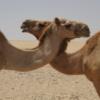 Wie in einer Wüstenregion fotografieren? - letzter Beitrag von Musicdiver